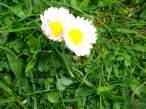 cvetic2.jpg